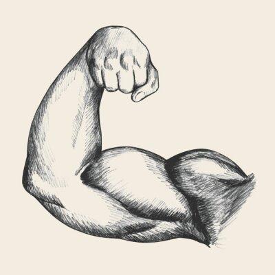 Poster Ilustração do esboço do braço direito humano macho muscular