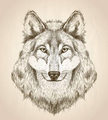 Poster Ilustração do esboço do vetor de uma opinião dianteira da cabeça do lobo.