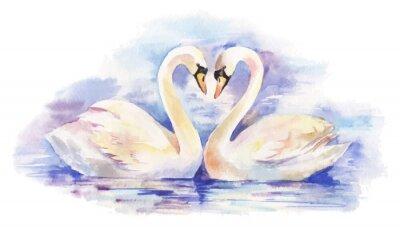 Poster Ilustração do vetor da aguarela de dois cisnes brancos