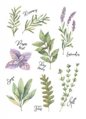 Poster Ilustração em aquarela. Cartaz com folhas verdes botânicas, ervas e ramos. Elementos de design floral. Perfeito para convites de casamento, cartões, blogs, gravuras, postais