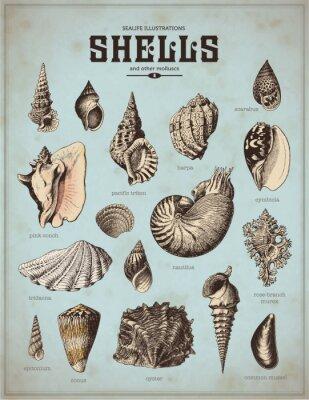 Poster ilustrações da vida do mar: conchas (1)