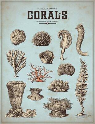 Poster ilustrações da vida do mar: corais, esponjas e anêmonas do mar (1)