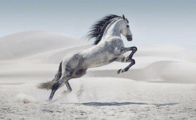 Poster Imagem apresentando o cavalo branco galopando