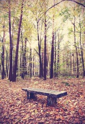 Poster Imagem filtrada Vintage de banco em uma floresta.
