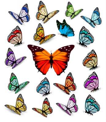 Poster Jogo das diferentes borboletas coloridas. Vector.