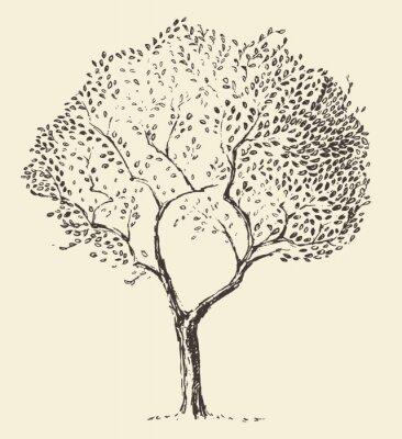 Poster Jovem, azeitona, árvore, Ilustração, vetorial, mão, desenhado