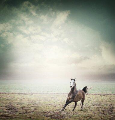 Poster Jovem, cavalo, Executando, pasto, céu, fundo, toned