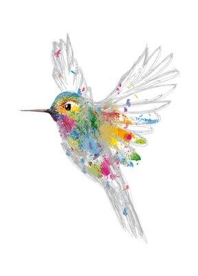 Poster Kolibri