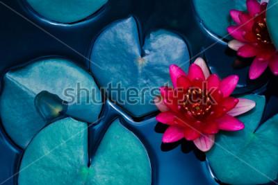 Poster lírio de água de lótus vermelho florescendo na superfície da água e de escaras em tons, fundo de natureza pura, planta aquática, símbolo do budismo.