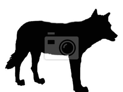 lobo silhueta cartazes para a parede posters coiote extinção