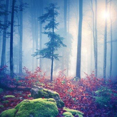 Poster Luz mágico na floresta nevoenta com sol