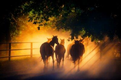 Poster Manada de cavalos