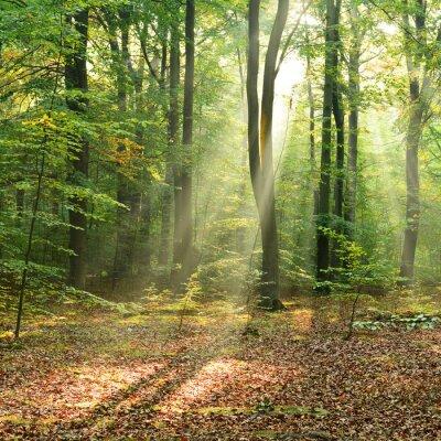 Poster Manhã na floresta