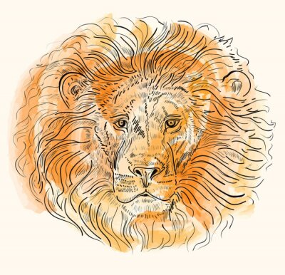 Poster Mão, desenhado, vetorial, Ilustração, Leão, cabeça