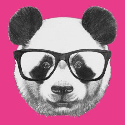 Poster Mão retrato de Panda desenhada com vidros. Vetor isolado elementos.