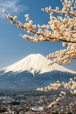 Poster Monte, Fuji, ramos, cereja, árvore, japão
