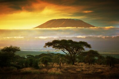 Poster Monte Kilimanjaro. Savanna em Amboseli, no Quênia