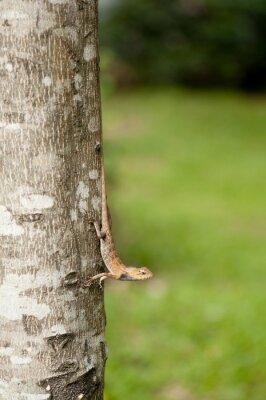 Poster Mudável, lagarto, árvore, tronco