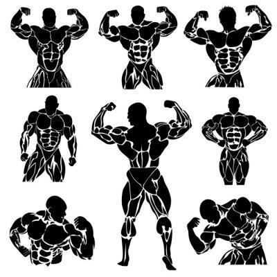 Poster Musculação, Powerlifting, vetor, definir