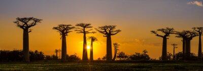 Poster Opinião do panorama ao pôr do sol acima Baobab avenida