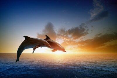 Poster Os golfinhos que saltam