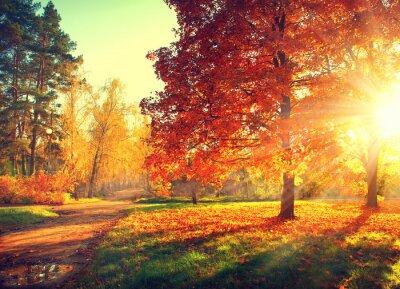 Poster Outono.