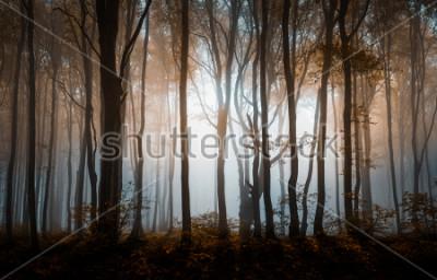 Poster Outono floresta nublada. Montanhas Balcãs, Bulgária.