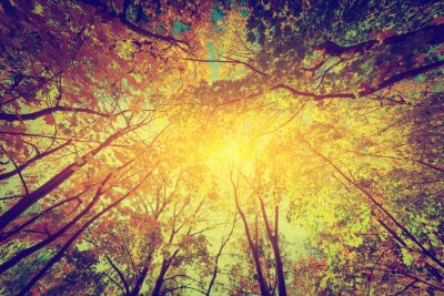 Poster Outono, queda de árvores. Sol brilhando através de folhas coloridas. Vintage