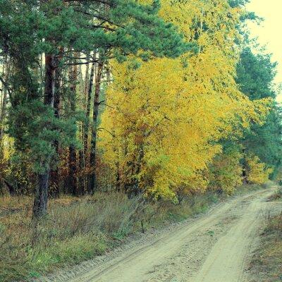 Poster País, estrada, bonito, Outono, floresta