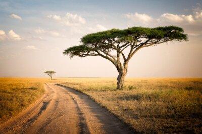 Poster Paisagem africana - Tanzânia