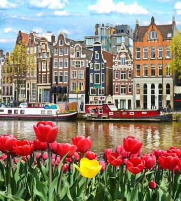 Poster Paisagem bonita com tulipas e casas em Amsterdam, Holanda