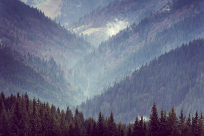Poster Paisagem de montes da floresta da montanha.