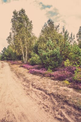 Poster Paisagem rural bonita com urze de florescência