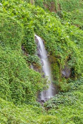 Poster Paroi humide e verdoyante, Anse des Cascades, ilha da Réunion