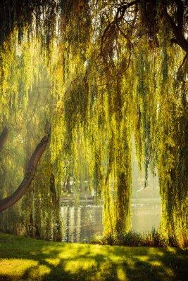 Poster Parque com lagoa e salgueiros