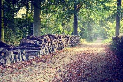 Poster Passeio na floresta do outono