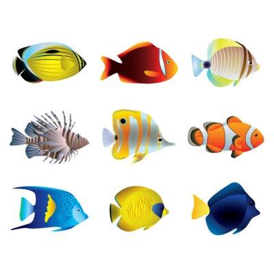 Poster Peixes tropicais conjunto de vetores
