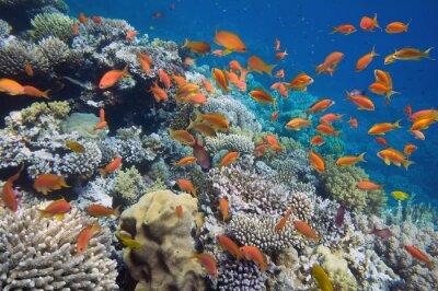 Poster Peixes tropicais no recife coral