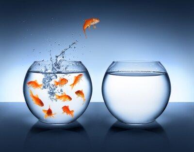 Poster peixinho jumping - aperfeiçoamento e carreira conceito