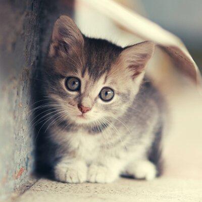 Poster Pequeno, gatinho, siting, Ao ar livre