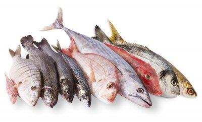 Poster pescato mediterraneo no fondo bianco