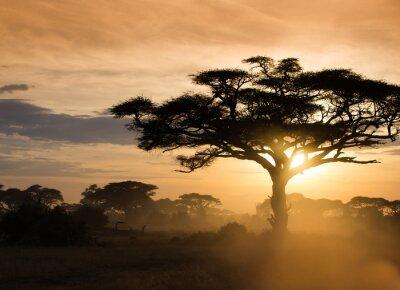Poster Pôr do sol, africano, savana