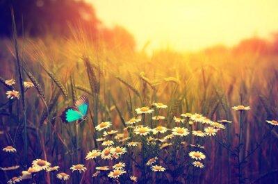 Poster Primavera voando prado da margarida da borboleta