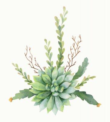 Poster Ramalhete do vetor da aquarela dos cactos e das plantas suculentos isolados no fundo branco.