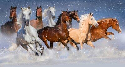 Poster Rebanho do cavalo funcionado rapidamente no campo de neve do inverno