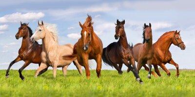Poster Rebanho funcionamento do cavalo no prado verde bonito
