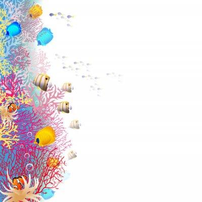 Poster recife de coral