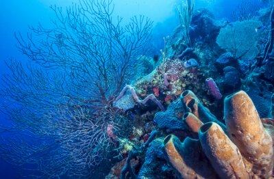 Poster Recife de coral subaquático