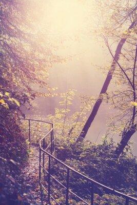 Poster Retro filtrada imagem de um caminho na floresta.