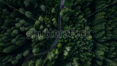 Poster Rua estreita entre a floresta, vista do drone